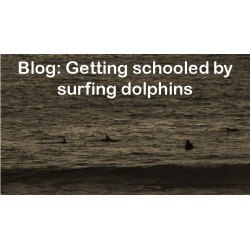 Getting schooled by surfing dolphins